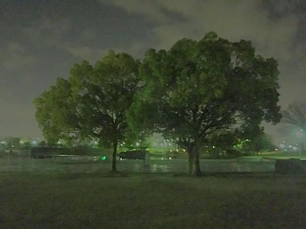 写真: 多機能写真・動画撮影&編集アプリ「Musemage」:HDR >夜間モードで撮影 - 6(撮影した写真)