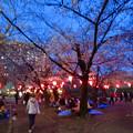 Photos: 沢山の人で賑わってた花見シーズンの鶴舞公園(2017年4月5日)- 17