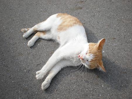 路地にいた野良猫