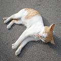 写真: 路地にいた野良猫
