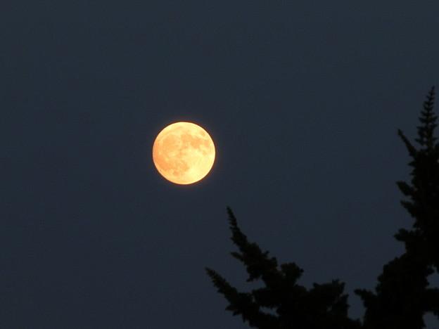 ほぼ満月...