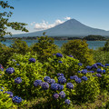 富士と紫陽花