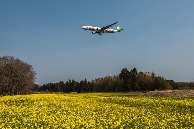 菜の花を飛ぶ