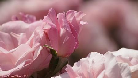 「 光のパレット 」 桜貝