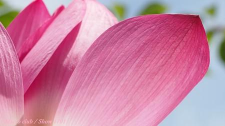 「 笑顔の理由 」 宇治植物公園 蓮の花
