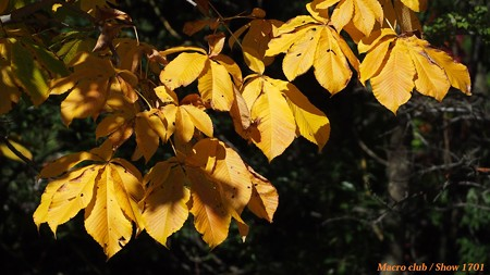 hiro 君のための 宇治植物公園の秋 「光に融ける」