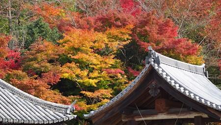 光のパレット 三室戸寺の紅葉と鐘楼
