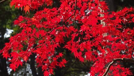 光のパレット 三室戸寺の紅葉 001 祈りの赤