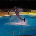 写真: クジラジャンプ