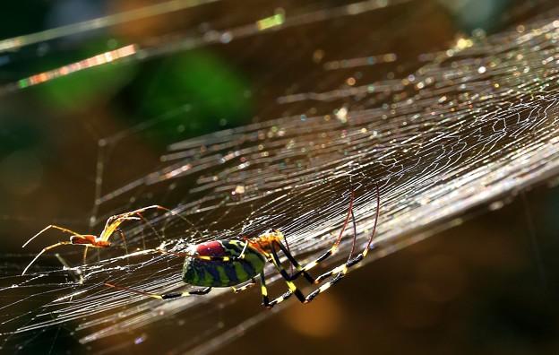 蜘蛛の糸の輝き