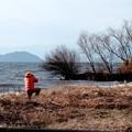 写真: 冬枯れの琵琶湖