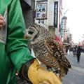 Photos: フクロウさんだ(≧∇≦)ノ彡