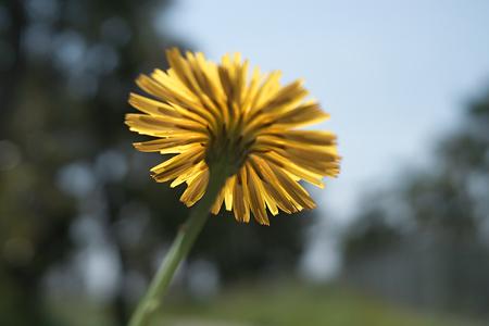 flower05252011dp2-01