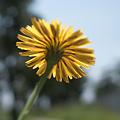 Photos: flower05252011dp2-01