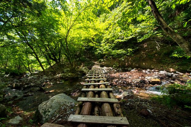 Photos: 森へ続く道