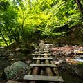 森へ続く道