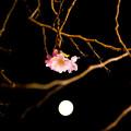 写真: 月下の華