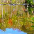 まいめの池1