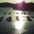 鳥羽海の朝日