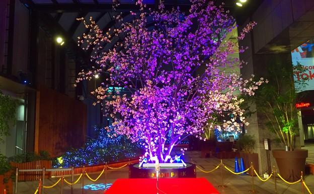 新宿高島屋の夜桜 #新宿 #東京 #夜景 #nightview #桜 #夜桜