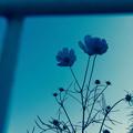 写真: autumn blue