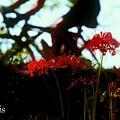 写真: 秋映え…