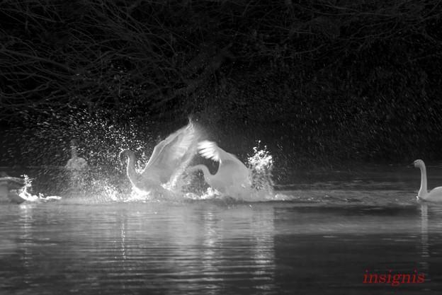 写真: Flashdance.......
