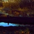 写真: 一鳥一夕.......