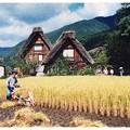 """写真: Omoidori""""収穫"""""""