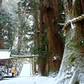 写真: 雪の参道