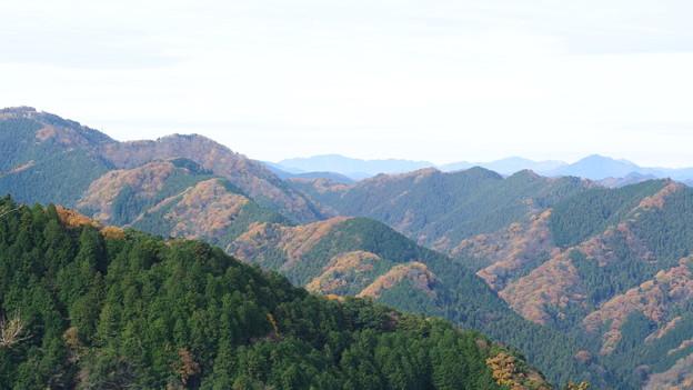 写真: 上から紅葉