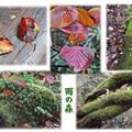 Photos: 雨の森