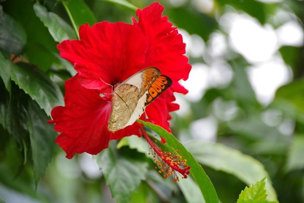 幸せを呼ぶ蝶