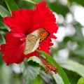 Photos: 幸せを呼ぶ蝶