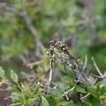写真: Buzzing of cicadas