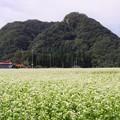 写真: 蕎麦の花と鎌倉山