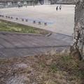 本町公園の桜は大分先が緑