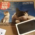 写真: iPhone 7 Plus咥えて持って来た日本の猫 ~同時到着10.5