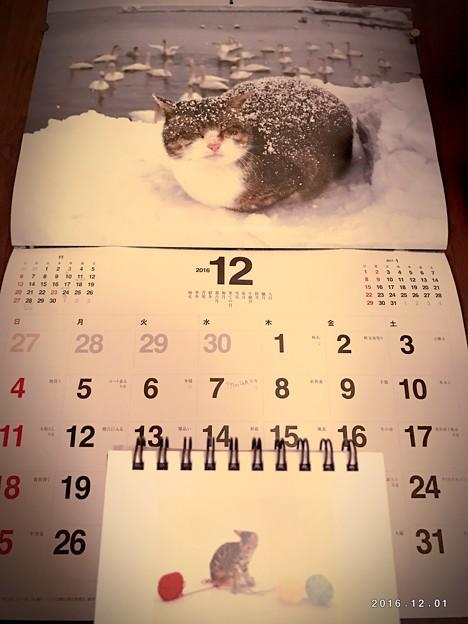もう12月もう師走もうラスト~丸くなって雪に寒さに耐えてる生きてる