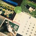 写真: 3月スタート ~誕生月もう終わり