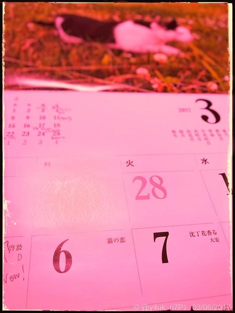 「猫の恋」の日 ~today 3.6