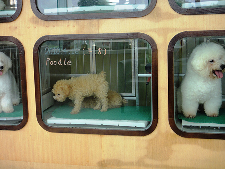 琉球犬|沖縄のペットショップ 沖縄愛犬ランド