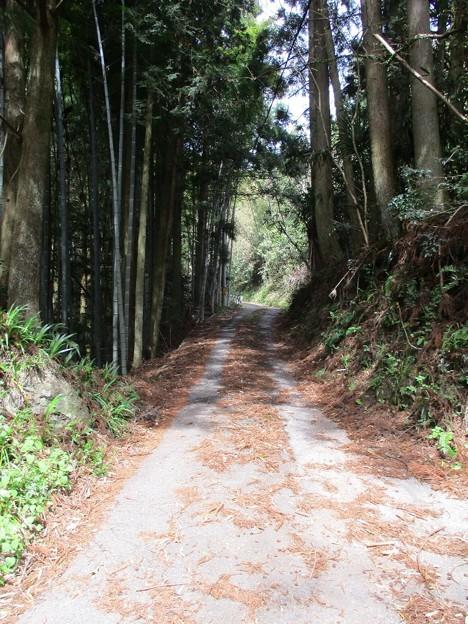 Photos: shingai08