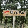 Photos: shingai37