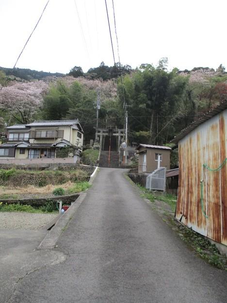 Photos: 03tsukudatsuzi_26