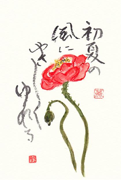 ポピー by ふうさん