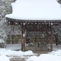写真: 雪が降る