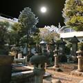 写真: 東海寺-09b(2)