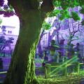 写真: 東海寺大山墓地-10b
