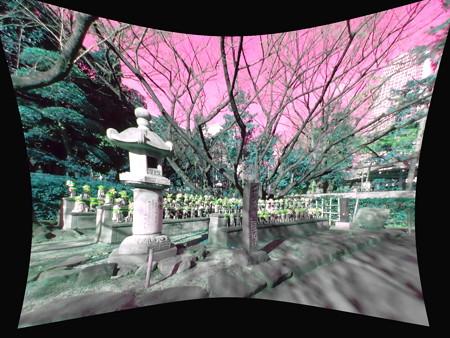 千躰子育地蔵尊_増上寺-03